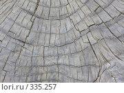 Купить «Фактура дерева», эксклюзивное фото № 335257, снято 24 апреля 2008 г. (c) Дмитрий Неумоин / Фотобанк Лори