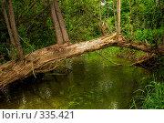 Перекинутое через речку дерево. Стоковое фото, фотограф Александр Иванов / Фотобанк Лори