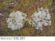 Купить «Ягель и зеленый мох», фото № 336381, снято 10 июня 2008 г. (c) Круглов Олег / Фотобанк Лори