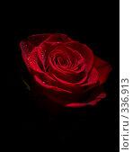 Купить «Красная роза в каплях росы на черном фоне», фото № 336913, снято 14 января 2008 г. (c) Владимир Воякин / Фотобанк Лори