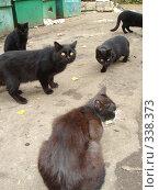 Коты с помойки. Стоковое фото, фотограф Александр Новиков / Фотобанк Лори
