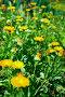 Цветущая календула, фото № 339149, снято 7 августа 2007 г. (c) Игорь Жоров / Фотобанк Лори