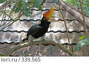Купить «Тропические птицы», фото № 339565, снято 2 марта 2008 г. (c) Валерий Ситников / Фотобанк Лори