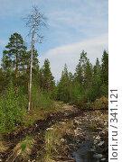 Купить «Путь в лесу», фото № 341121, снято 21 июня 2008 г. (c) Валерий Александрович / Фотобанк Лори