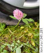 Купить «Цветок клевера по колесом автомобиля Flower clover», фото № 341281, снято 7 октября 2006 г. (c) Анатолий Заводсков / Фотобанк Лори