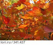 Купить «Золотая осень», фото № 341437, снято 7 октября 2007 г. (c) Вера Беляева / Фотобанк Лори