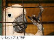 Купить «Свободу попугаям!», фото № 342169, снято 10 мая 2008 г. (c) Лариса Фокина / Фотобанк Лори