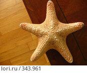 Купить «Морская звезда», фото № 343961, снято 11 мая 2008 г. (c) Вера Беляева / Фотобанк Лори