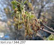 Купить «Весна. Springtime», фото № 344297, снято 3 мая 2006 г. (c) sav / Фотобанк Лори