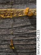 Купить «Капли смолы на деревянной стене», фото № 345233, снято 3 июля 2008 г. (c) Werin / Фотобанк Лори
