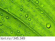Купить «Структура зеленого листа», фото № 345349, снято 1 апреля 2008 г. (c) Мельников Дмитрий / Фотобанк Лори