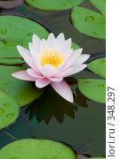 Купить «Кувшинка или водяная лилия.Дендрарий города Сочи.», фото № 348297, снято 3 июля 2008 г. (c) Федор Королевский / Фотобанк Лори