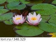 Купить «Кувшинка или водяная лилия.Дендрарий города Сочи.», фото № 348329, снято 3 июля 2008 г. (c) Федор Королевский / Фотобанк Лори