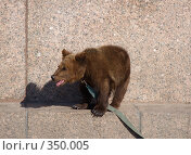 Купить «Медвежонок на гранитной набережной», фото № 350005, снято 4 мая 2008 г. (c) Олег Хархан / Фотобанк Лори