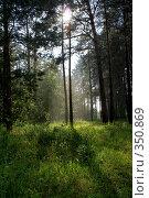 Купить «Лес», фото № 350869, снято 13 июня 2008 г. (c) Константин Жидов / Фотобанк Лори
