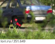 Купить «Тюльпаны», фото № 351649, снято 11 мая 2008 г. (c) Алексей Ковальчук / Фотобанк Лори