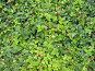 Фон. Ягодная поляна., фото № 355745, снято 23 июня 2008 г. (c) Елена Беляева / Фотобанк Лори