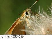 Купить «Бабочка», фото № 356689, снято 16 августа 2018 г. (c) Олег / Фотобанк Лори