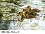 Купить «На болоте», фото № 356761, снято 16 августа 2018 г. (c) Олег / Фотобанк Лори