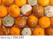Купить «Партия мандаринов, испорченных плесенью», фото № 358041, снято 10 июня 2008 г. (c) Георгий Марков / Фотобанк Лори