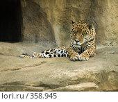 Купить «Ягуар», фото № 358945, снято 3 июля 2008 г. (c) Михаил Крекин / Фотобанк Лори
