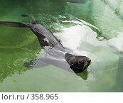 Купить «Морской котик», фото № 358965, снято 3 июля 2008 г. (c) Михаил Крекин / Фотобанк Лори