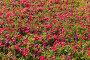 Цветочный газон, эксклюзивное фото № 360493, снято 14 июля 2008 г. (c) Александр Алексеев / Фотобанк Лори