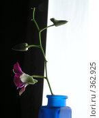 Купить «Цветок на границе черного и белого», фото № 362925, снято 20 октября 2006 г. (c) Галина Бурцева / Фотобанк Лори