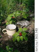 Купить «Лесной Натюрморт», фото № 363149, снято 19 июля 2008 г. (c) Марат Кабиров / Фотобанк Лори