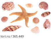 Купить «Морская звезда и ракушки», фото № 365449, снято 25 июня 2008 г. (c) Pshenichka / Фотобанк Лори