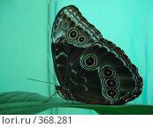 Купить «Большая бабочка на зеленом фоне», фото № 368281, снято 25 июня 2008 г. (c) Софья Ханджи / Фотобанк Лори