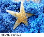 Купить «Морская звезда на синем песке», фото № 369873, снято 7 июня 2008 г. (c) Софья Ханджи / Фотобанк Лори