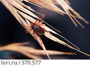 Купить «Энцефалитный клещ», фото № 370577, снято 28 июня 2008 г. (c) Sergey Toronto / Фотобанк Лори