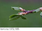 Купить «Ветка», фото № 372185, снято 1 мая 2008 г. (c) Андрей Некрасов / Фотобанк Лори