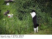 Купить «Кошачье общение», фото № 373357, снято 22 июля 2008 г. (c) sav / Фотобанк Лори