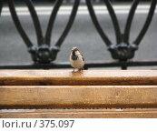 Купить «Отдых после дождя», фото № 375097, снято 10 июля 2008 г. (c) Алексей Гунев / Фотобанк Лори