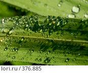 Купить «Капли на листе», фото № 376885, снято 29 июля 2008 г. (c) Tamara Sushko / Фотобанк Лори