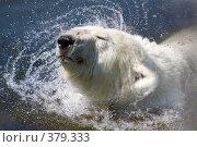 Купить «Белый медведь», фото № 379333, снято 12 июля 2008 г. (c) Asja Sirova / Фотобанк Лори