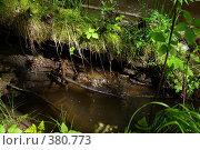 Лесной ручей. Стоковое фото, фотограф Андрей Зинич / Фотобанк Лори