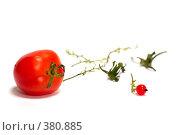 Купить «Последний помидор и последняя ягода красной смородины», фото № 380885, снято 31 июля 2008 г. (c) Олег Пивоваров / Фотобанк Лори