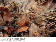 Купить «Опавшие листья», фото № 380941, снято 5 апреля 2008 г. (c) Дмитрий Лагно / Фотобанк Лори