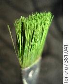 Купить «Зеленая кисточка на темном фоне», фото № 381041, снято 31 июля 2008 г. (c) Софья Ханджи / Фотобанк Лори