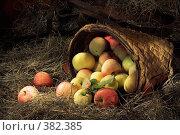 Купить «Яблоки на сеновале», фото № 382385, снято 2 сентября 2006 г. (c) Михаил Котов / Фотобанк Лори