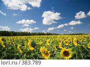Купить «Летний пейзаж», фото № 383789, снято 11 июля 2020 г. (c) Юрий Егоров / Фотобанк Лори