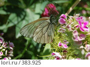 Купить «Бабочка», фото № 383925, снято 12 июля 2008 г. (c) Александр Поганкин / Фотобанк Лори
