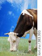 Купить «Корова ест траву», фото № 383993, снято 23 января 2019 г. (c) Estet / Фотобанк Лори