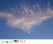 Купить «Облако в форме пера», фото № 388797, снято 5 июля 2008 г. (c) Юлия Ухина / Фотобанк Лори