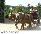 Купить «Битюги», фото № 389201, снято 3 июля 2005 г. (c) Вячеслав Смоленский / Фотобанк Лори