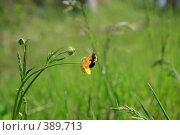 Купить «Желтый цветок с пчелой на зеленом фоне луга», фото № 389713, снято 18 мая 2008 г. (c) Дмитрий Лагно / Фотобанк Лори