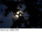 Купить «Лунный свет», фото № 389781, снято 18 ноября 2018 г. (c) Сергей  Ушаков / Фотобанк Лори